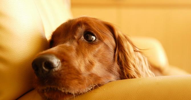 Tu Perro Necesita: ¡¡¡rutina!!!