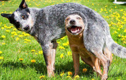 perros-adolescentes