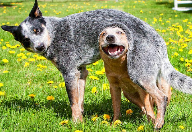 Perros ¿adolescentes?