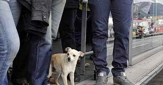 La Odisea De Un Perro En Autobús