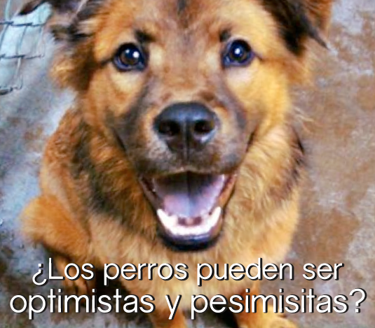optimismo_insert