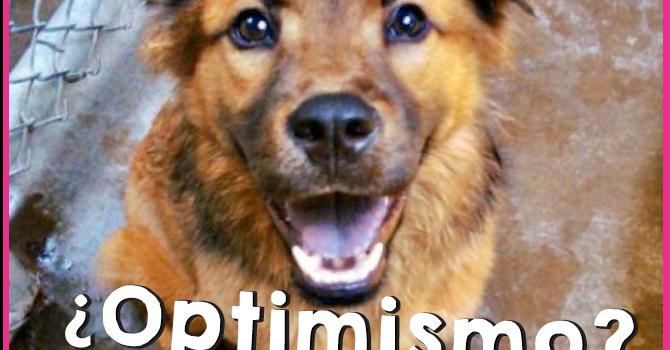 Tu Perro Puede Ser Optimista