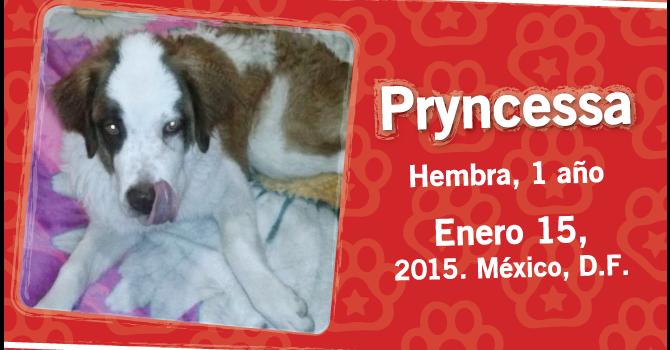 Pryncessa: Super Cachorro De La Semana