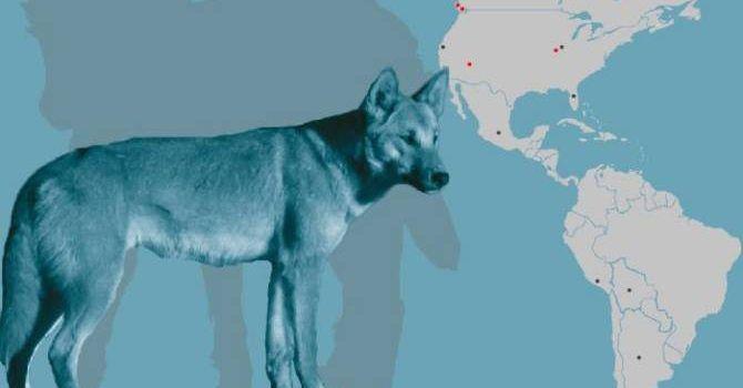 La Llegada De Los Perros A América