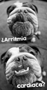 arrtimia_insert