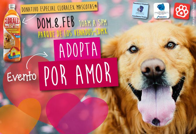 feb19-Adoptaxamor-Web