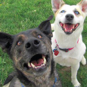 happy_dogs_positivo