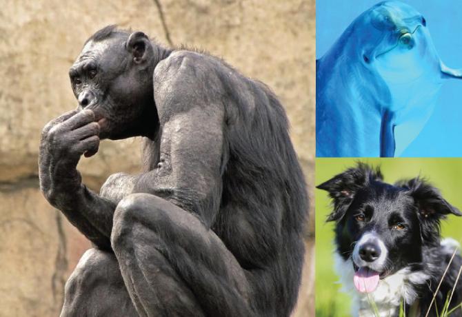 Inteligencia: perros, delfines y primates