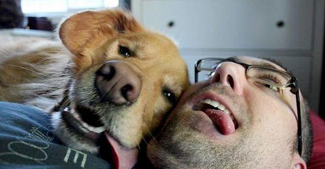 Vida Con Perro Vs Vida Sin Perro