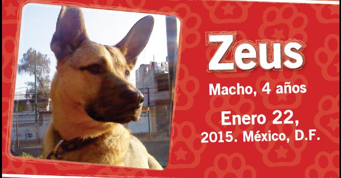 Zeus: Super Cachorro De La Semana