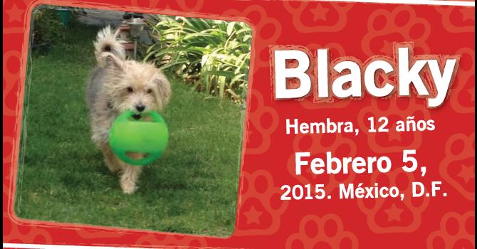 Blacky: Super Cachorro De La Semana