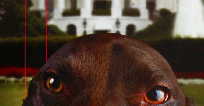 Indiscreciones De Un Perro Gringo
