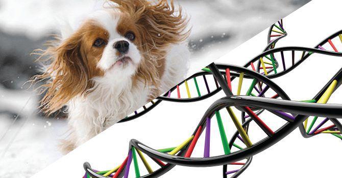 Crianza Selectiva Altera Genoma Canino