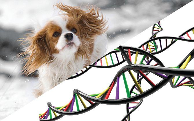 genoma_perro