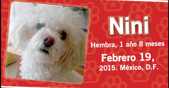 Nini: Super Cachorro De La Semana