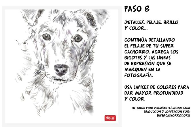 paso8