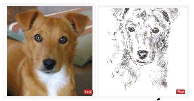 Boceto Para Dibujar Perros Super Cachorros