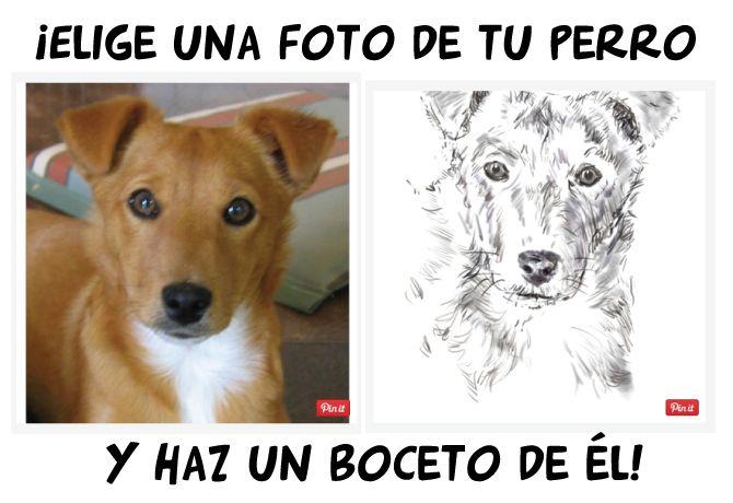 Boceto para dibujar perros