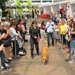 EstacionConsultaMarzo-SuperCachorros2015-50