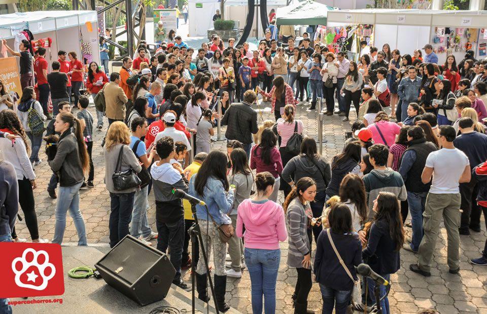 EstacionConsultaMarzo-SuperCachorros2015-7