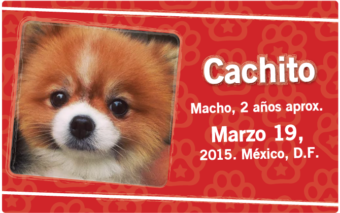 cachito_fetim