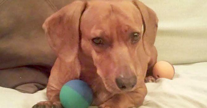 Lumi: Super Cachorro De La Semana
