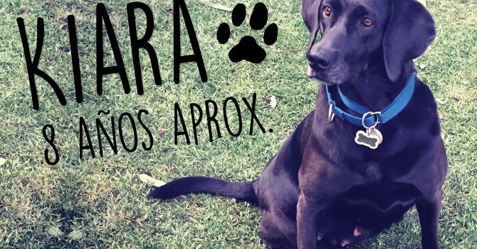Kiara: Super Cachorro De La Semana