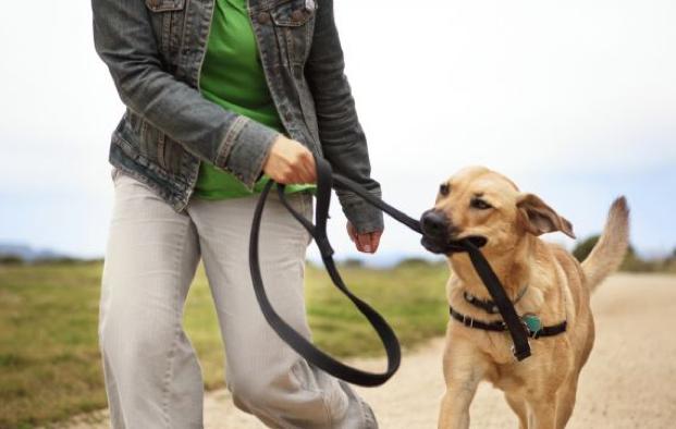 Cómo debo pasear a mi perro
