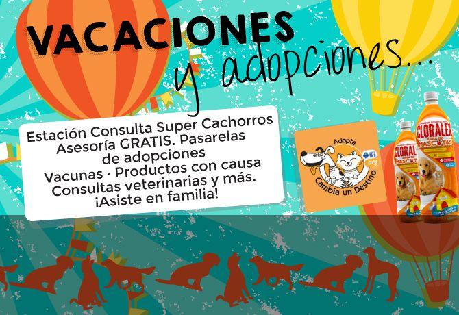 adopciones_portada1
