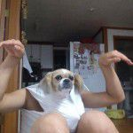perfectly-timed-dog-photos-15