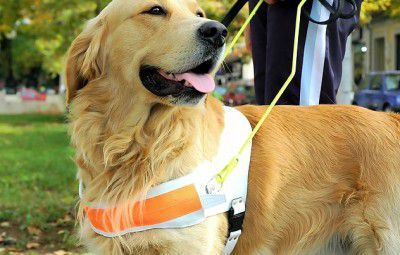 93394580-therapy-dog-practice-632x475