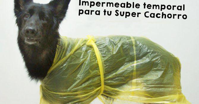 Impermeable Para Tu Perro