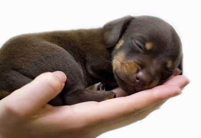 So-Tiny-puppies-15834876-600-399