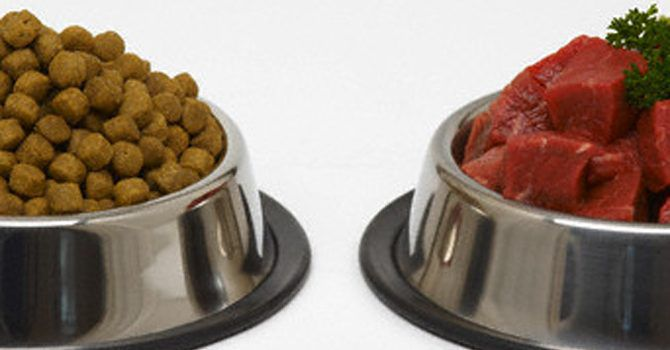 Dog Food Kibble And Meat