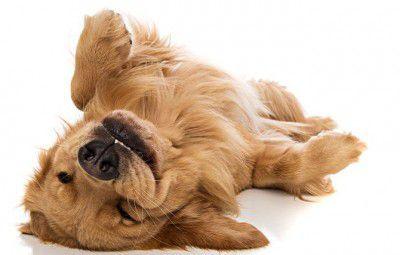 chien-parfaite-sante