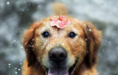 Happy_dog_is_happy_Img01