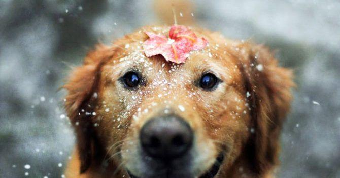 Happy Dog Is Happy Img01