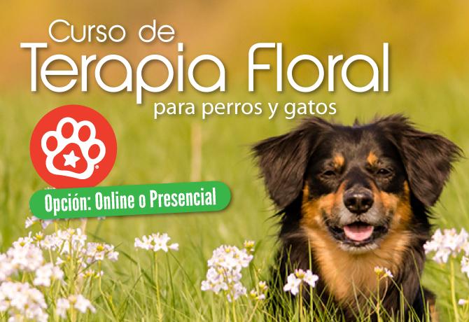 TerapiaFloral-2016A