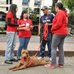 ConsultaSuperCachorrosDIC2015-10
