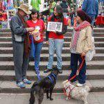 ConsultaSuperCachorrosDIC2015-15