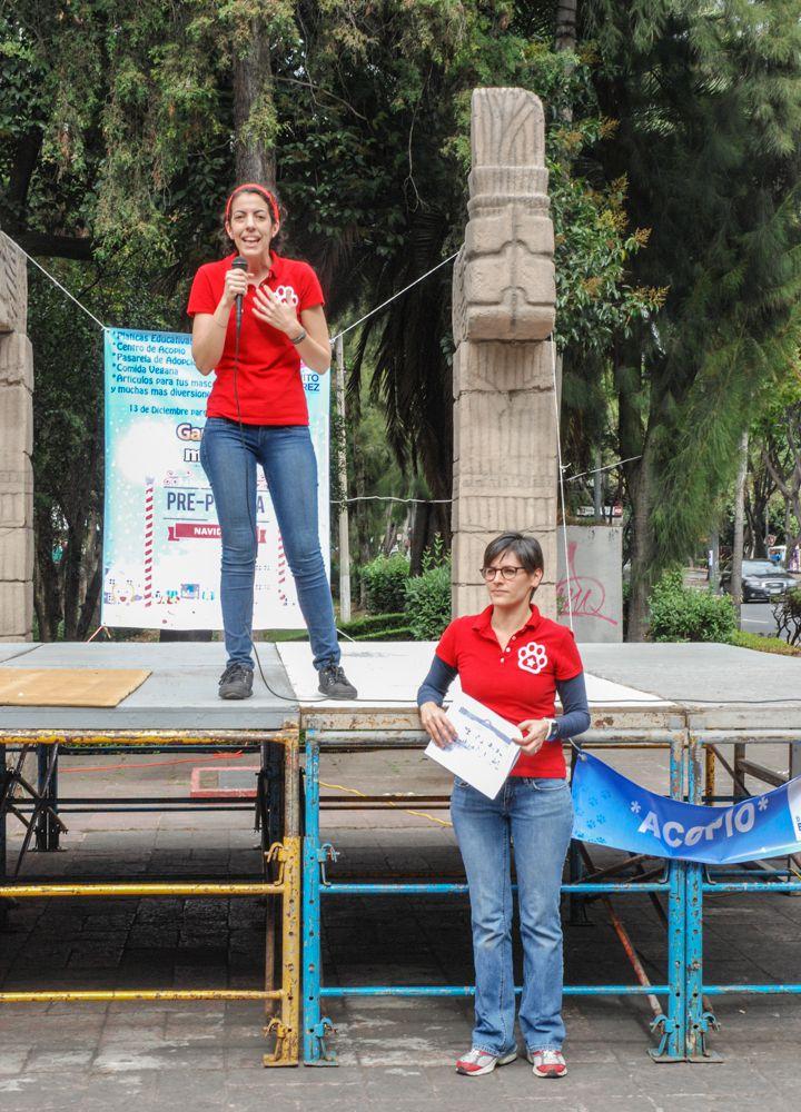 ConsultaSuperCachorrosDIC2015 17