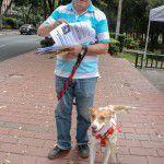 ConsultaSuperCachorrosDIC2015-24