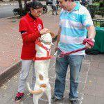 ConsultaSuperCachorrosDIC2015-25