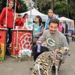 ConsultaSuperCachorrosDIC2015-31