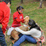 ConsultaSuperCachorrosDIC2015-33
