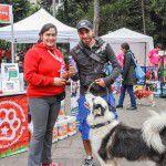 ConsultaSuperCachorrosDIC2015-5