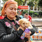 ConsultaSuperCachorrosDIC2015-53