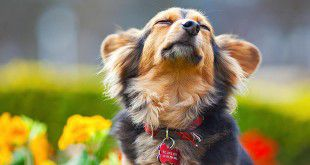 dog_and_flowers-1565905