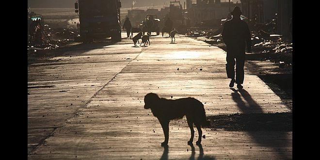 La soledad de los animales
