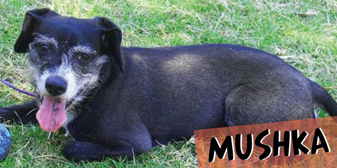Mushka: Super Cachorro De La Semana